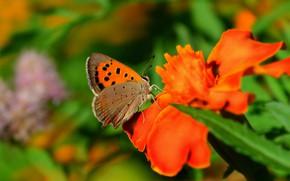 Картинка Макро, Цветы, Бабочка, Flower, Macro, Butterfly