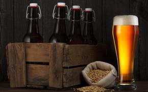 Картинка пена, бокал, пиво, бутылки, ящик, зёрна
