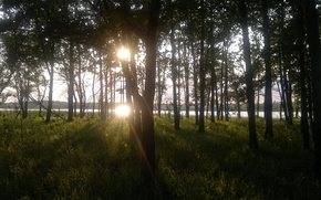 Картинка трава, Лес, после дождя
