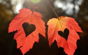 Картинка осень, листья, сердечки