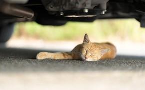 Обои кошка, рыжая, спит, под машиной