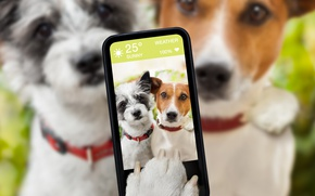 Картинка собаки, юмор, блюр, смартфон, селфи