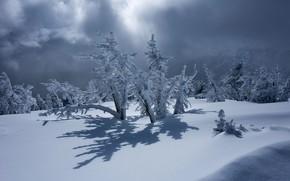 Картинка зима, снег, деревья, тень, Орегон, сугробы, Oregon, Mount Bachelor