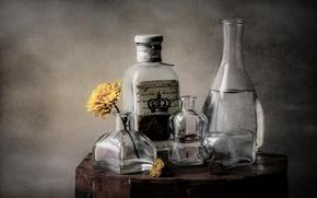 Картинка цветок, стекло, бутылка, посуда, натюрморт, графин