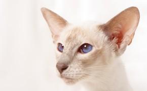 Картинка глаза, кот, фон