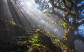 Обои ступени, дымка, дерево, тропа, туман, природа, свет, лучи, утро