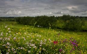 Картинка Nature, Flowers, Spring, Field