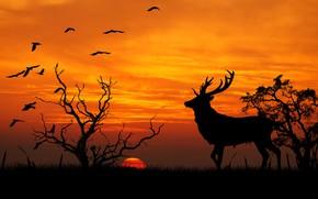 Обои природа, силуэт, рога, олень, вектор