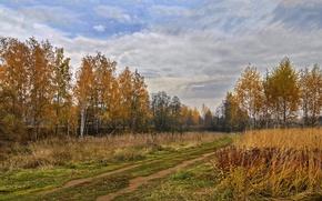 Картинка дорога, осень, природа, березы