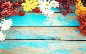 Картинка фон, Цветы, хризантемы