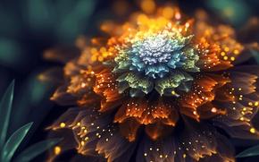 Обои цветок, фрактал, by SallySlips
