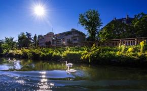 Картинка зелень, лето, небо, солнце, лучи, деревья, река, Франция, дома, лебеди, кусты, Страсбург