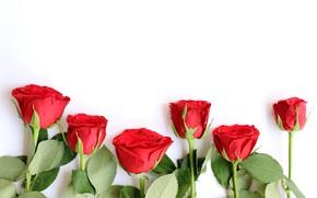Картинка цветы, розы, букет, красные, red, wood, flowers, romantic, roses