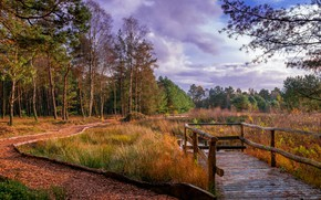 Обои Kirchwalsede, осень, трава, облака, лес, речка, листья, дорожка, деревья, Германия, мостики, Saxony, парк