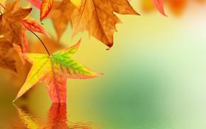Картинка осень, листья, вода, отражение, блюр