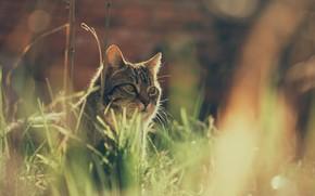 Картинка кошка, трава, кот, боке, котейка