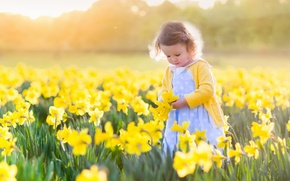 Обои солнце, daffodils, поле, нарциссы, little girls, ребенок, fields, девочка, цветы