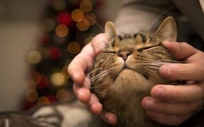 Обои дом, руки, кошка