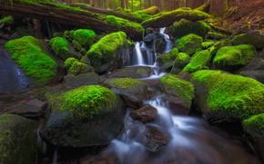 Картинка лес, деревья, ручей, камни, мох, поток, США, штат Вашингтон