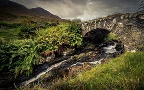 Картинка мост, ручей, камни, папоротник