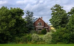 Картинка зелень, поле, трава, деревья, дом, сад, Нидерланды, кусты, Kolhorn