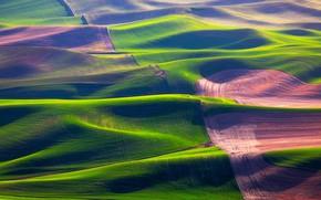 Картинка поле, трава, холмы, США, штат Вашингтон