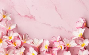 Картинка цветы, лепестки, розовые, wood, pink, flowers, petals, плюмерия, plumeria