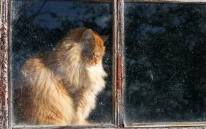 Картинка кошка, дом, окно