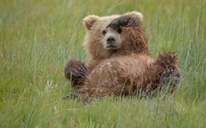 Картинка медведь, жест, Кто здесь?