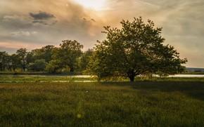 Картинка дерево, река, луг