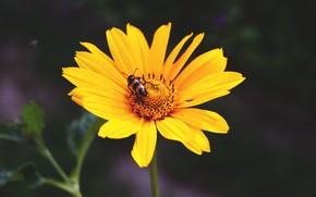 Обои цветок, лето, растение, насекомое, лепестки, макро