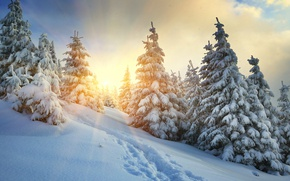 Картинка холод, зима, лес, небо, солнце, облака, лучи, снег, пейзаж, следы, вид, тропа, сказка, ели, склон, …