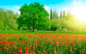 Картинка зелень, поле, лето, небо, трава, солнце, облака, деревья, цветы, маки, красные