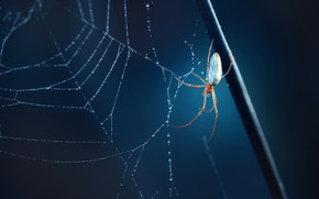 Картинка фон, паутина, паук