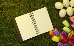 Картинка трава, цветы, яйца, весна, colorful, Пасха, тюльпаны, wood, flowers, tulips, spring, Easter, eggs, decoration, Happy