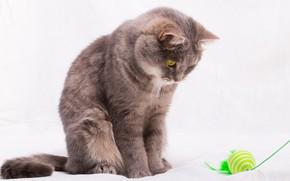 Картинка кот, игрушка, шарик, перья, постель, белый фон, зелёные, нитка