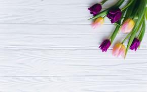 Картинка цветы, тюльпаны, розовые, fresh, wood, pink, flowers, beautiful, tulips, spring, purple, tender