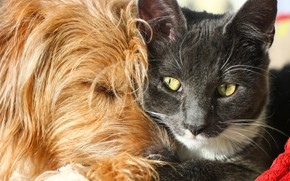 Картинка кот, собака, дружба