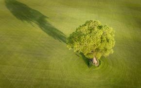 Картинка поле, дерево, Англия, тень, England, Йоркшир, Yorkshire, Эверингем, Everingham