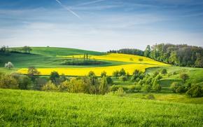 Картинка зелень, трава, деревья, поля, луга