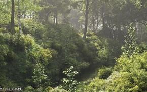 Картинка лес, природа, река, растительность, nederlandse polder