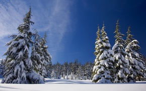 Картинка зима, лес, небо, солнце, снег, деревья