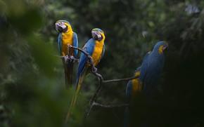 Картинка попугаи, деревья, ары, природа