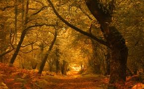 Обои осень, лес, деревья, Англия, England, Exmoor, Эксмур, Horner Woods