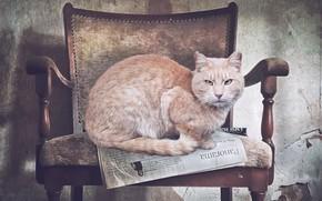 Картинка кот, кресло, газета