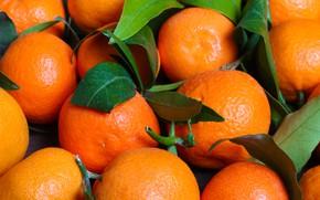 Картинка листья, цитрус, мандарин