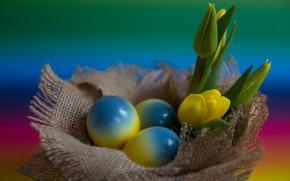 Картинка Цветы, Тюльпаны, Пасха, Яйца, Праздник