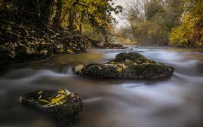 Картинка осень, лес, листья, река, камни