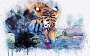 Обои тигр, картина, акварель, живопись