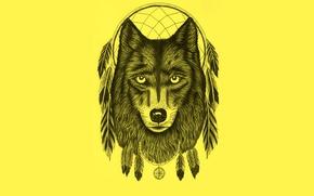 Обои dream catcher, светлый фон, wolf, dreamcatcher, ловец снов, волк, перья, минимализм